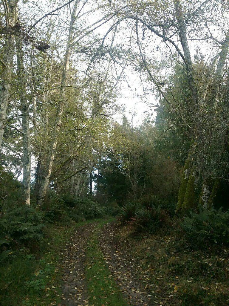 An overgrown dirt road through the woods.