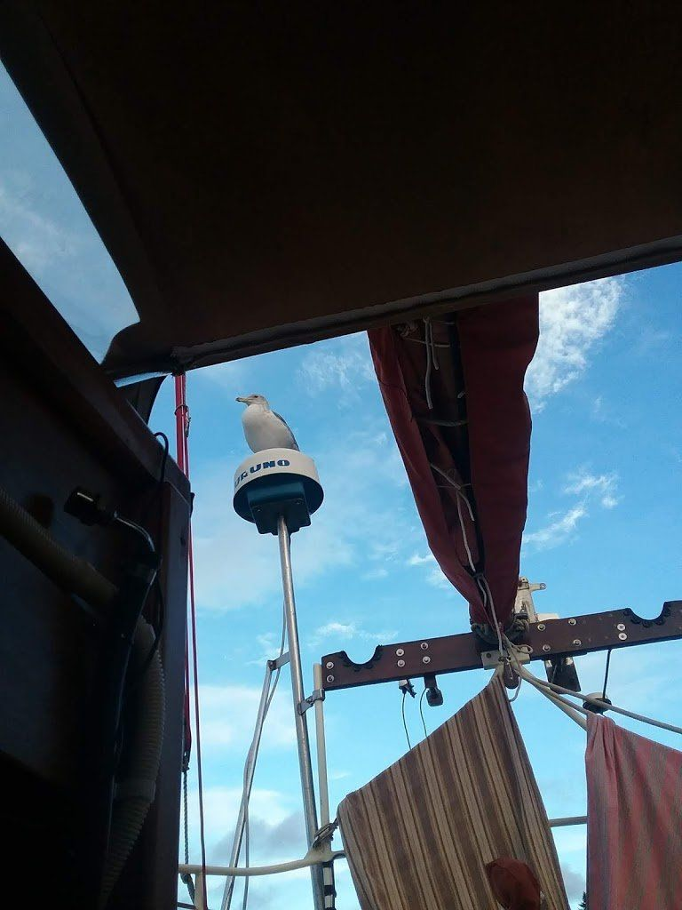 A view from the boat's companionway. A seagull is perched on the radar dome, looking down.