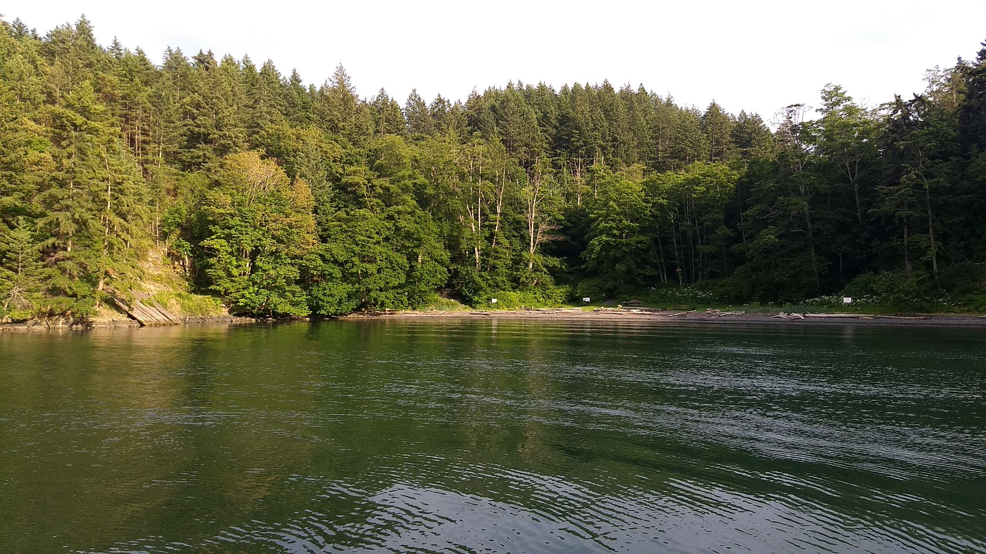 A small, calm bay with a very densely forested shore.