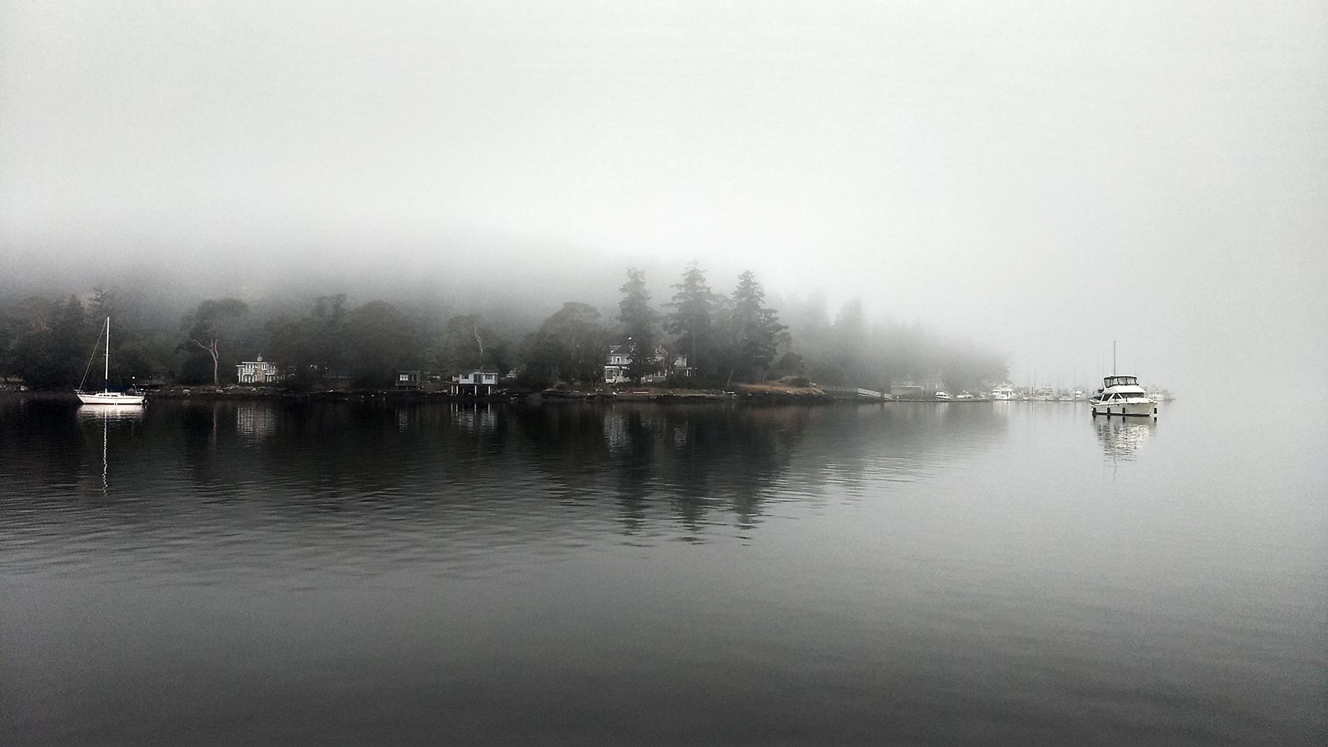 A foggy shoreline. The trees fade into gray and the water is very calm, reflecting the shore.