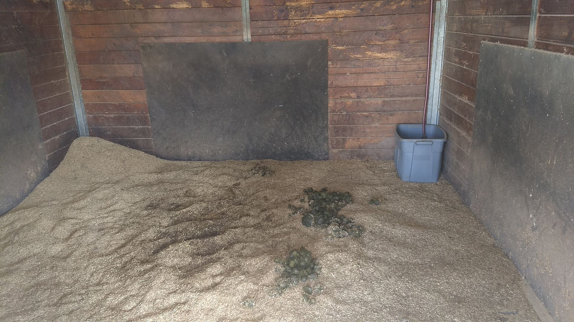 A square stall with a a pile of fresh bedding in one corner and a water bucket in the other. Some manure and soiled bedding are in the middle.