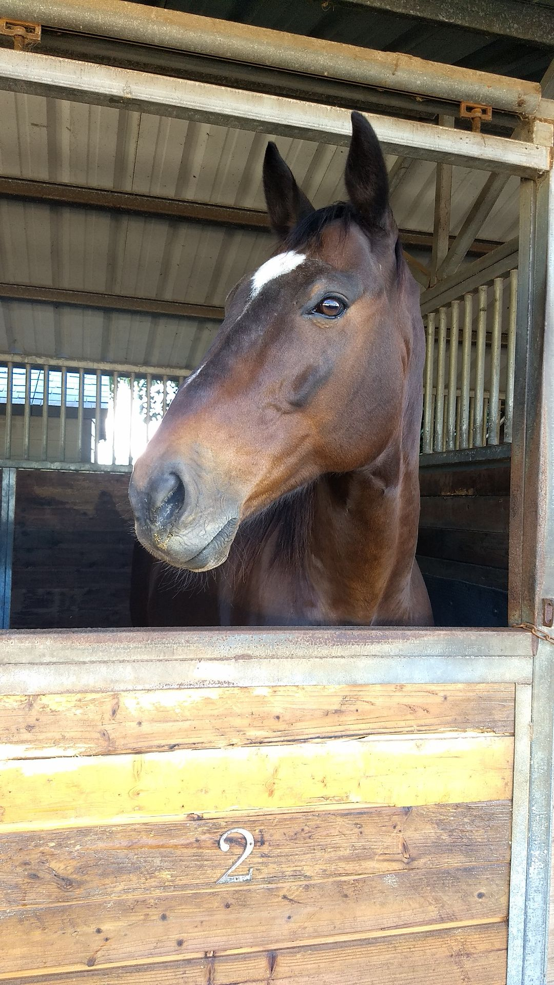A large brown horse in his stall with a white patch on his forehead.