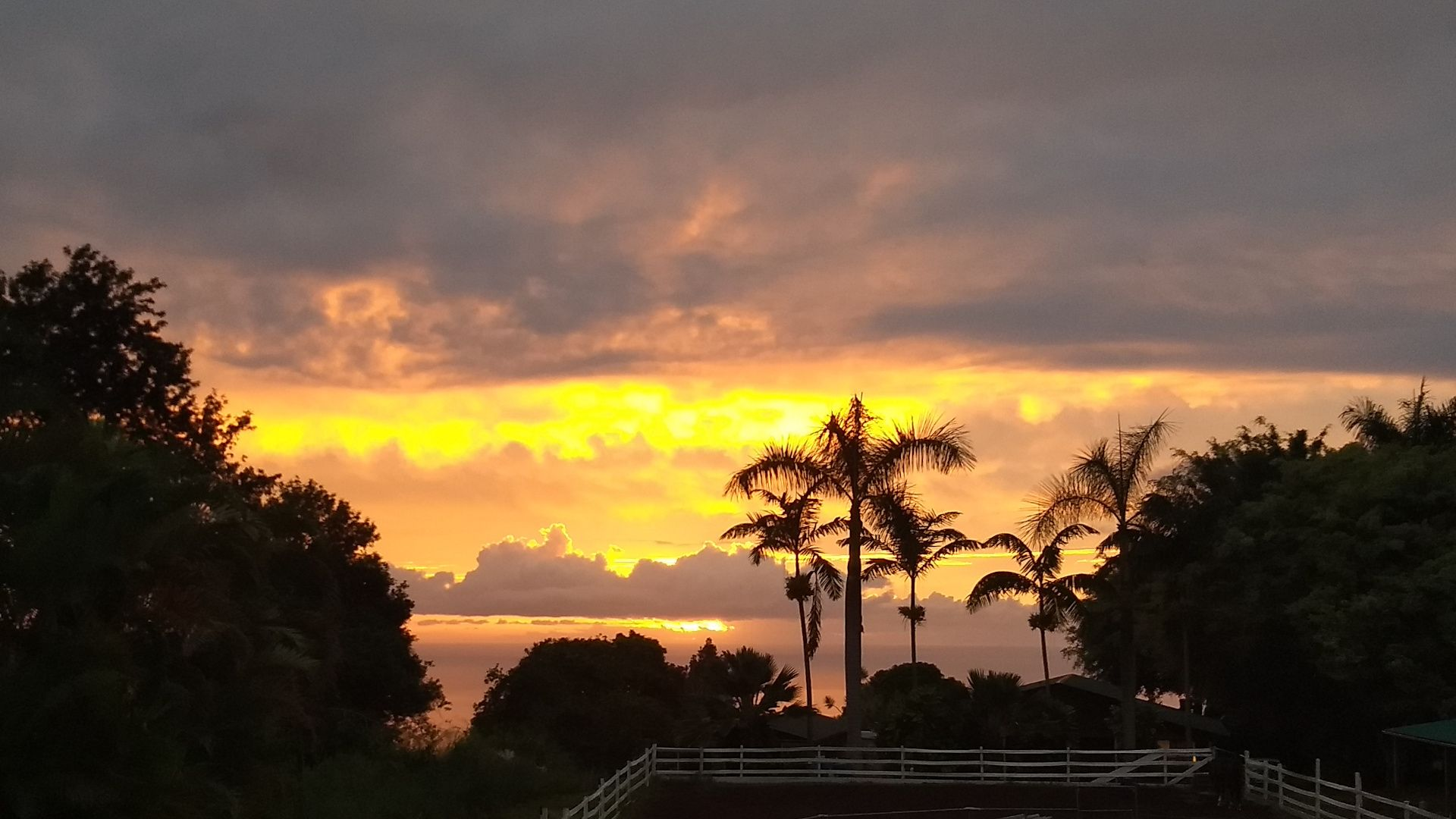 A brilliant sunset with many layers of clouds. Palms and deciduous trees are silhouetted in the midground.