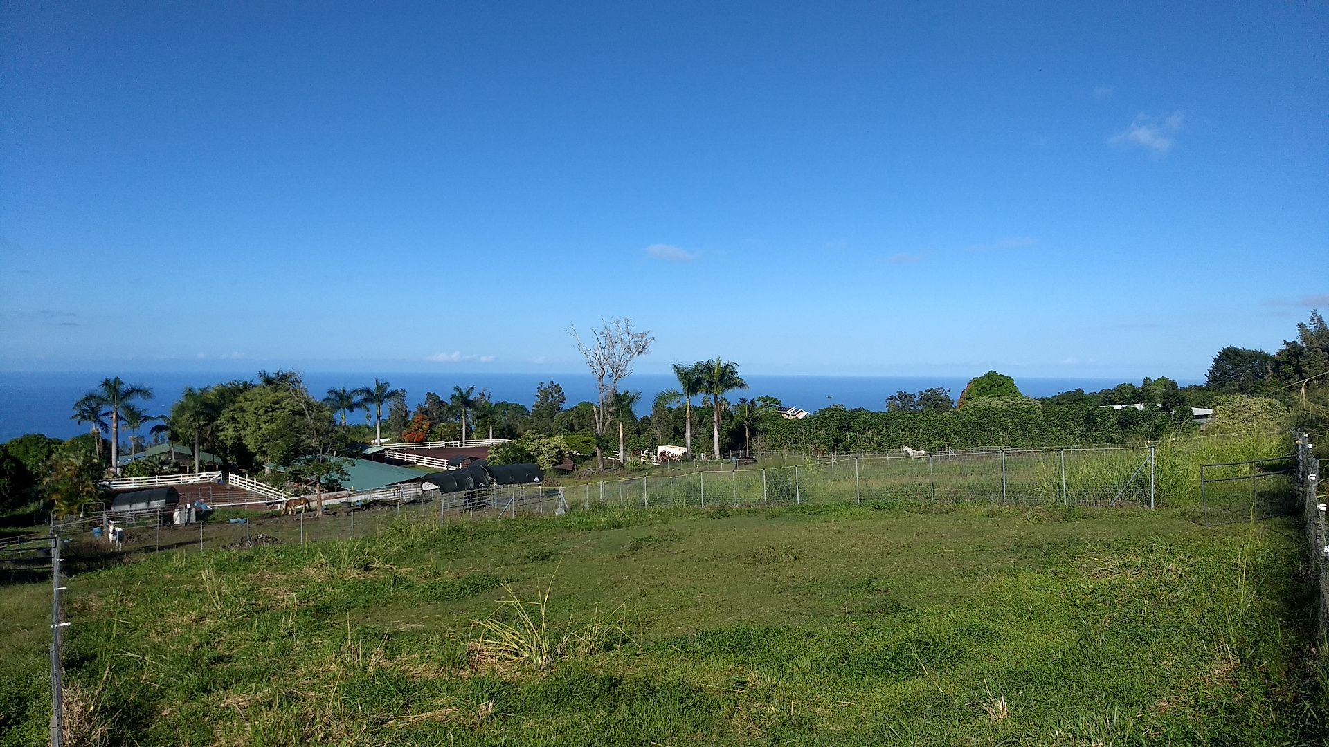 A view down a grassy hill of the barn. Palms and other trees are visible, as is the ocean in the distance.